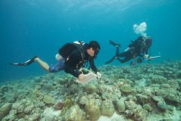 Expedition_Maldives_2020_Raa_Atoll_Station_57_MAL_014_20200112055911