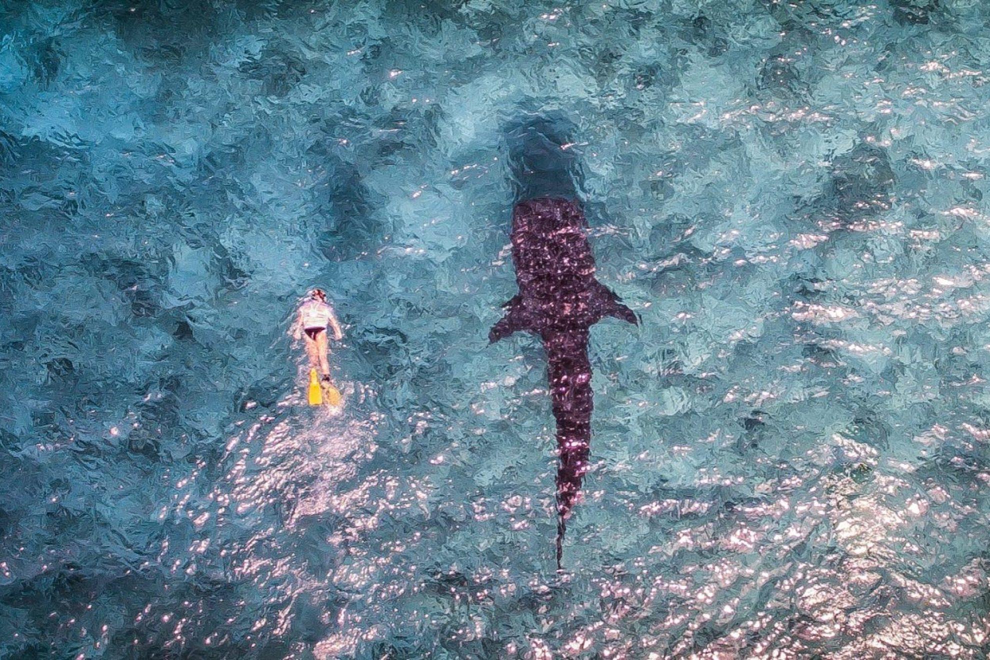Whaleshark Aerial